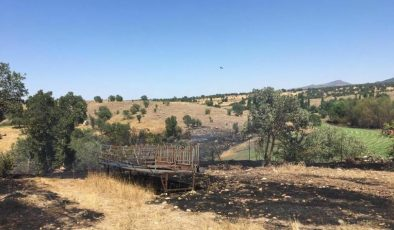 Uşak'ta 55 koyun yanarak telef oldu