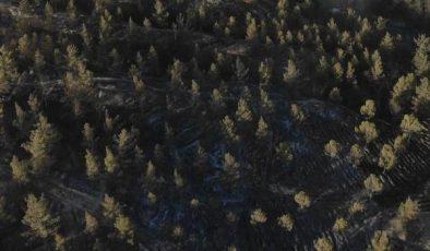 Uşak'ta ormanlık alana girişler 2 ay yasaklandı