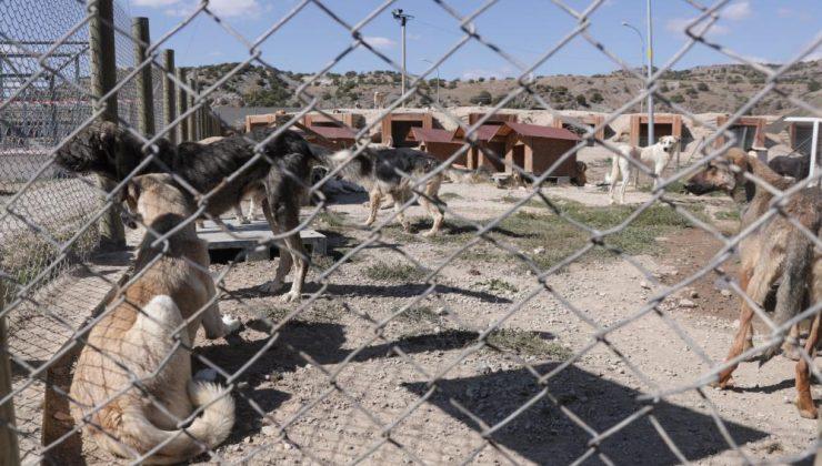 """Kütahya Belediye Başkanı Prof.Dr. Alim IŞIK: """"Bakımevinde 3 bin 599 hayvan tedavi edildi"""""""